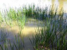 Fresh thick grass with water Stock Photo