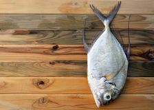 Fresh Threadfin jack fish from fishery market. This fish have a good meat it's very delicious seafood photo in outdoor sunlight Royalty Free Stock Photo
