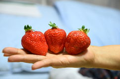 Fresh three red strawberries looks so appetizing Royalty Free Stock Images