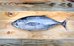 Fresh thunnus fish for cooking. From asian fishery market Stock Photography