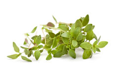 Fresh thyme Stock Photography