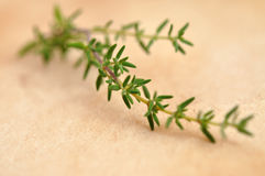 Fresh Thyme Stock Photo