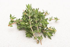 Fresh Thyme. Sprigs on a kitchen countertop Stock Images