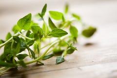 Fresh thyme Stock Photos