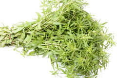 Fresh thyme. Thyme is an aromatic perennial evergreen herb with culinary, medicinal, and ornamental uses Stock Photo