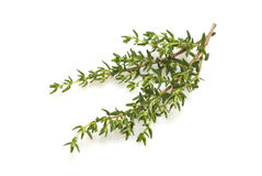 Fresh thyme branch 2. Fresh thyme branch isolated on white background stock images