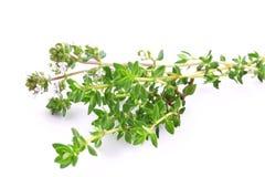 Fresh thyme Royalty Free Stock Image