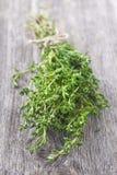 Fresh thyme royalty free stock photo
