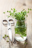 Fresh thyme in glass Royalty Free Stock Photography