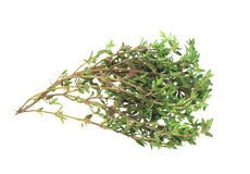 Fresh thyme herb Stock Image