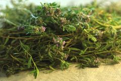 Fresh thyme herb in bloom, lemon thyme plants, linen background, healthy food, greens. Copy space stock photography