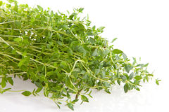 Fresh thyme herb in closeup Royalty Free Stock Photo