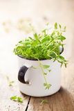 Fresh thyme herb in enamel cup Royalty Free Stock Photo