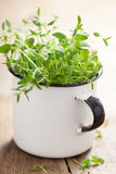 Fresh thyme herb in enamel cup Stock Photo