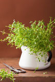 Fresh thyme herb in enamel pot Royalty Free Stock Images
