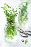 Fresh thyme herb in glass Royalty Free Stock Image