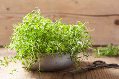 Fresh thyme herb in metal bowl Stock Images