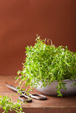 Fresh thyme herb in metal bowl Royalty Free Stock Photography