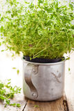 Fresh thyme herb in rustic cup Royalty Free Stock Photos
