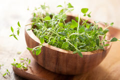 Fresh thyme herb in wooden bowl Stock Photography