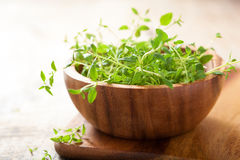 Fresh thyme herb in wooden bowl Stock Images
