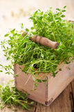 Fresh thyme herb in wooden box Royalty Free Stock Photos