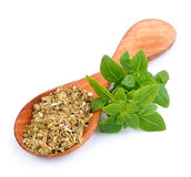 Fresh thyme herbs . Royalty Free Stock Photography