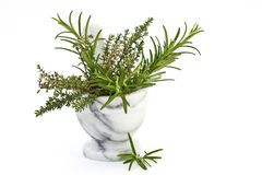 Fresh thyme and rosemary Stock Photo
