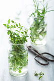 Fresh thyme and rosemary in glass Royalty Free Stock Photo