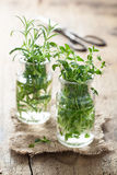Fresh thyme and rosemary in glass Stock Photography