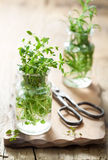 Fresh thyme and rosemary herbs in glass Stock Photography