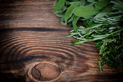 Fresh thyme, rosemary and sage leaves Royalty Free Stock Photography