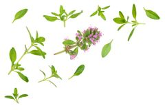 Fresh thyme spice isolated on white background with copy space for your text. Top view. Flat lay pattern Royalty Free Stock Photos