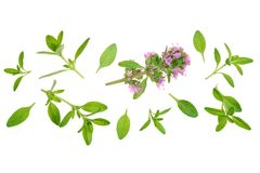 Fresh thyme spice isolated on white background with copy space for your text. Top view. Flat lay pattern Royalty Free Stock Photography