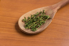Fresh Thyme into a spoon Stock Photography