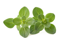 Fresh Thyme sprig Royalty Free Stock Photography