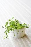 Fresh thyme, still life. Stock Images