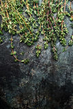 Fresh thyme twigs on rustic background, top view Stock Image
