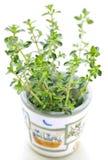 Fresh thyme on white background Royalty Free Stock Photo