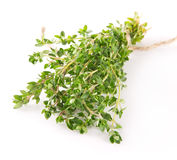 Fresh thyme Royalty Free Stock Images