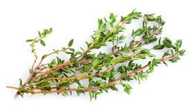 Fresh thyme on white background Stock Photos