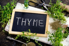 Fresh Thyme on a white wooden board. Royalty Free Stock Images