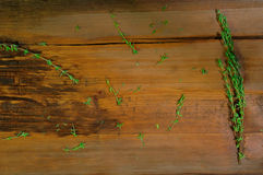 Fresh thyme  on wooden background Stock Images