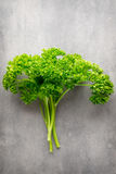 Fresh tied parsley on gray surface. Stock Image