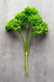 Fresh tied parsley on gray surface. Stock Photography