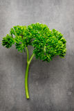 Fresh tied parsley on gray surface. Royalty Free Stock Image