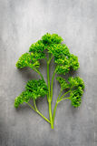 Fresh tied parsley on gray surface. Royalty Free Stock Photo