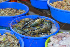Fresh tiger prawn Stock Photos
