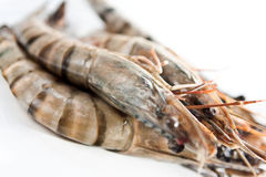 Fresh tiger prawn with shell on Stock Photography