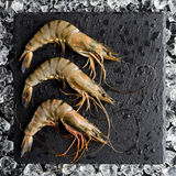Fresh tiger shrimp on ice on a black stone table Stock Image